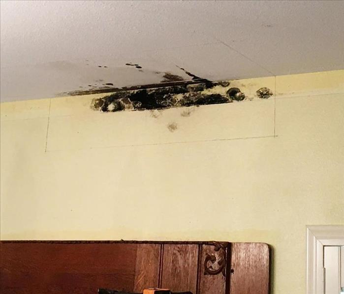mold damage in ceiling and wall