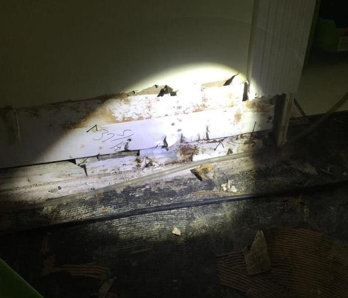Mold Growth
